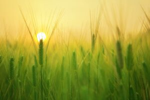 Arthrose: Mit der richtigen Morgenroutine zum schmerzfreien, erfüllten und aktiven Leben